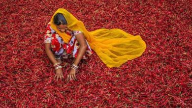Photo of May's missing maushis: A Mumbai summer without the itinerant East Indian masala makers