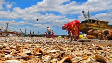 Photo of Dried fish is a much-loved alternative to fresh fish across the country